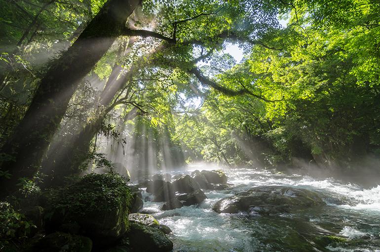 木漏れ日さす渓流